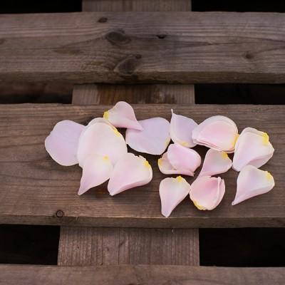 Pétales rose pâle