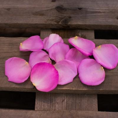 Pétale rose