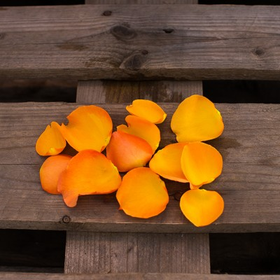 Pétales orange