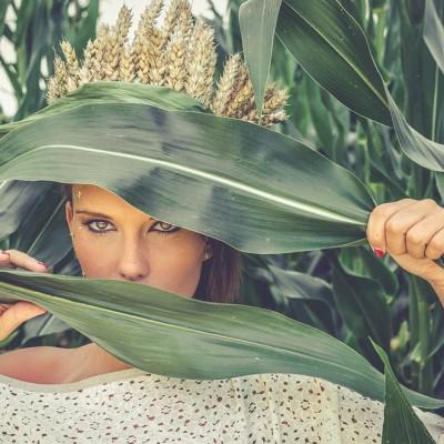 Shooting epis maïs