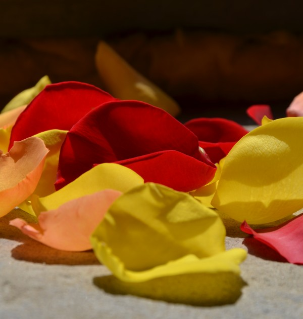 Fleuriste créatif-Achat de pétales en ligne